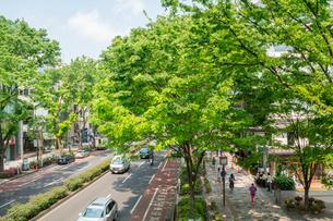 新緑の表参道の写真素材 [FYI01479657]