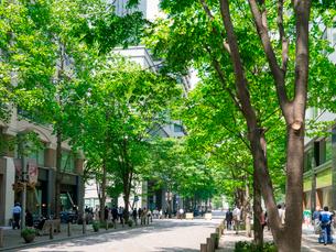 春の丸の内仲通りと新緑のケヤキ並木の写真素材 [FYI01479743]