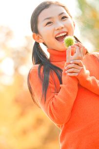 紅葉の中で栗を持つ小学生の女の子の写真素材 [FYI01479780]