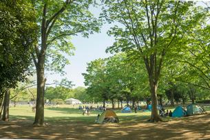 小金井公園の森の写真素材 [FYI01479863]
