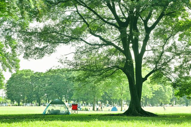 小金井公園のエノキの大木の写真素材 [FYI01479876]