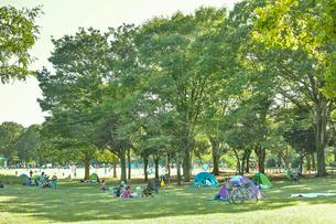小金井公園の森の写真素材 [FYI01480082]
