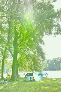 日よけテントと大木の写真素材 [FYI01480708]