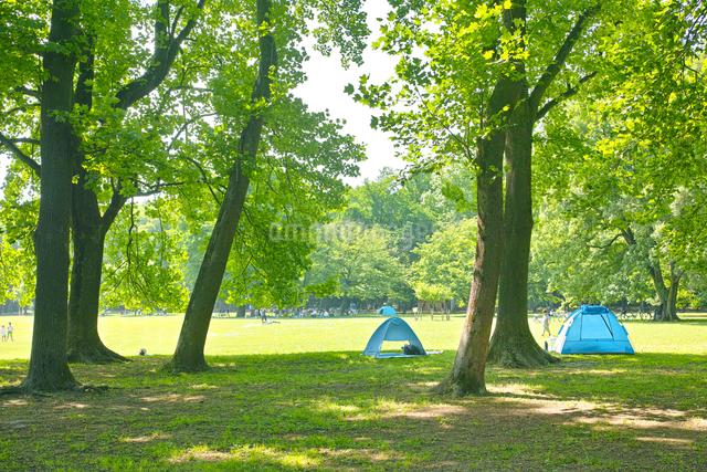 小金井公園のユリノキの森の写真素材 [FYI01480740]