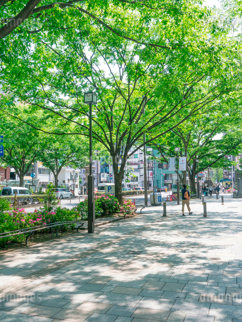 表参道の歩道と木陰の写真素材 [FYI01480768]
