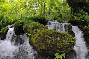 木谷沢渓流 奥大山の写真素材 [FYI01480837]