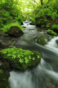 木谷沢渓流 奥大山の写真素材 [FYI01481183]
