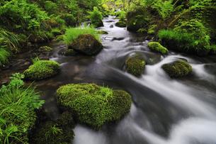 木谷沢渓流 奥大山の写真素材 [FYI01481226]
