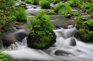 木谷沢渓流 奥大山の写真素材 [FYI01481292]