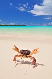 砂浜にカニの写真素材 [FYI01481442]