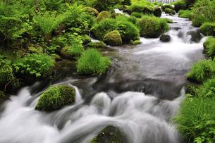 木谷沢渓流 奥大山の写真素材 [FYI01481481]