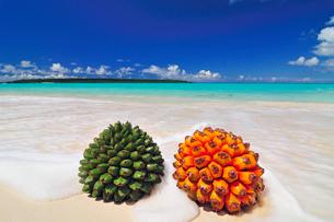 砂浜にアダンの実とタコノキの実の写真素材 [FYI01481538]