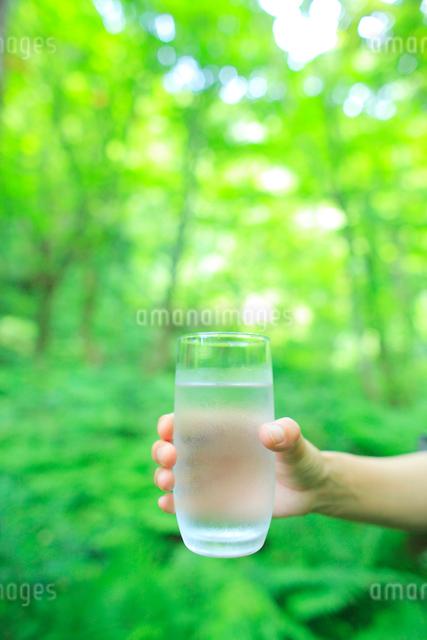 森と水のエコイメージの写真素材 [FYI01481614]