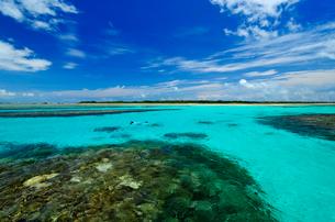 石西礁湖でシュノーケリング 竹富島沖の写真素材 [FYI01481752]