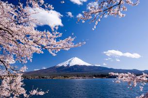 桜と富士山の写真素材 [FYI01481786]
