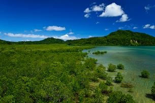 浦内川河口のマングローブ 西表島の写真素材 [FYI01481828]