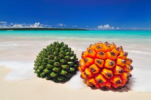 砂浜にアダンの実とタコノキの実の写真素材 [FYI01482152]