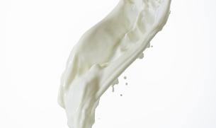 白い背景の牛乳の飛沫の写真素材 [FYI01485130]