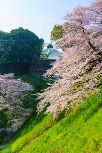 牛ヶ淵の桜の写真素材 [FYI01485467]