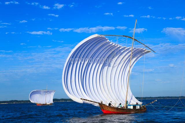 霞ヶ浦帆引き船の写真素材 [FYI01485760]