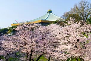 牛ヶ淵の桜の写真素材 [FYI01485863]