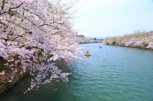 弘前公園 西濠の桜の写真素材 [FYI01485979]