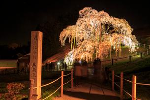 ライトアップされた滝桜の写真素材 [FYI01486126]