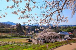 滝桜の写真素材 [FYI01486260]