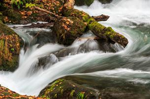 秋の奥入瀬渓流 阿修羅の流れの写真素材 [FYI01486354]