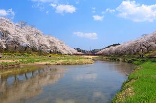 夏井千本桜の写真素材 [FYI01486572]