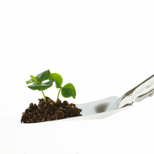スコップと植物の写真素材 [FYI01486618]