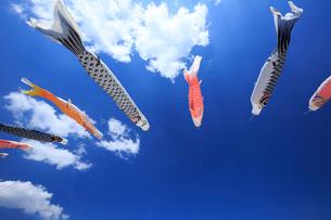 鯉のぼりと青空の写真素材 [FYI01486685]