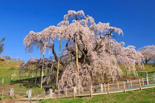 滝桜の写真素材 [FYI01486724]