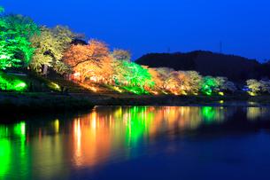 ライトアップされた夏井千本桜の写真素材 [FYI01486818]
