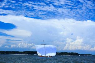霞ヶ浦帆引き船の写真素材 [FYI01486844]