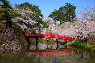 桜咲く弘前公園 内濠と鷹丘橋の写真素材 [FYI01486881]