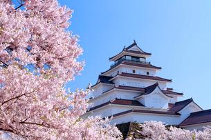 桜と鶴ヶ城の写真素材 [FYI01486895]