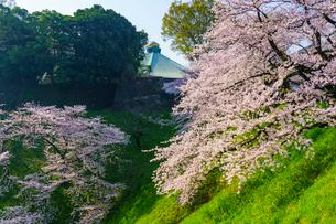 牛ヶ淵の桜の写真素材 [FYI01487278]