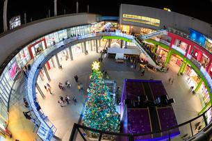 パレットタウンのクリスマスツリーとギフトボックスのオブジェの写真素材 [FYI01487306]