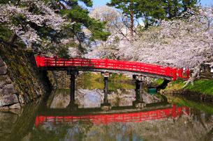 桜咲く弘前公園 内濠と鷹丘橋の写真素材 [FYI01487347]