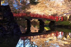弘前公園 鷹丘橋と内濠のライトアップの写真素材 [FYI01487405]