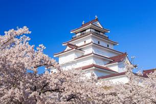 桜と鶴ヶ城の写真素材 [FYI01487598]