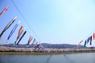 北上川と鯉のぼりの写真素材 [FYI01487765]