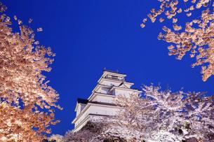 ライトアップされた桜と鶴ヶ城の写真素材 [FYI01487822]