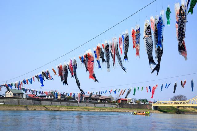 北上川と鯉のぼりの写真素材 [FYI01487997]