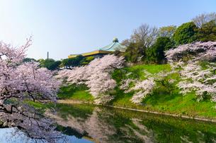 牛ヶ淵の桜の写真素材 [FYI01488063]