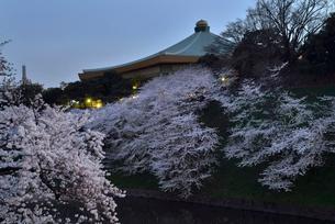 桜の花と日本武道館の写真素材 [FYI01488522]