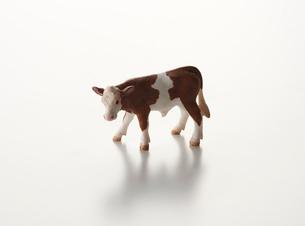 白い背景の牛のオブジェの写真素材 [FYI01488577]