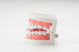 白い背景の歯の模型の写真素材 [FYI01488605]