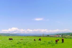 広大な日高地方の馬の放牧地の写真素材 [FYI01489126]